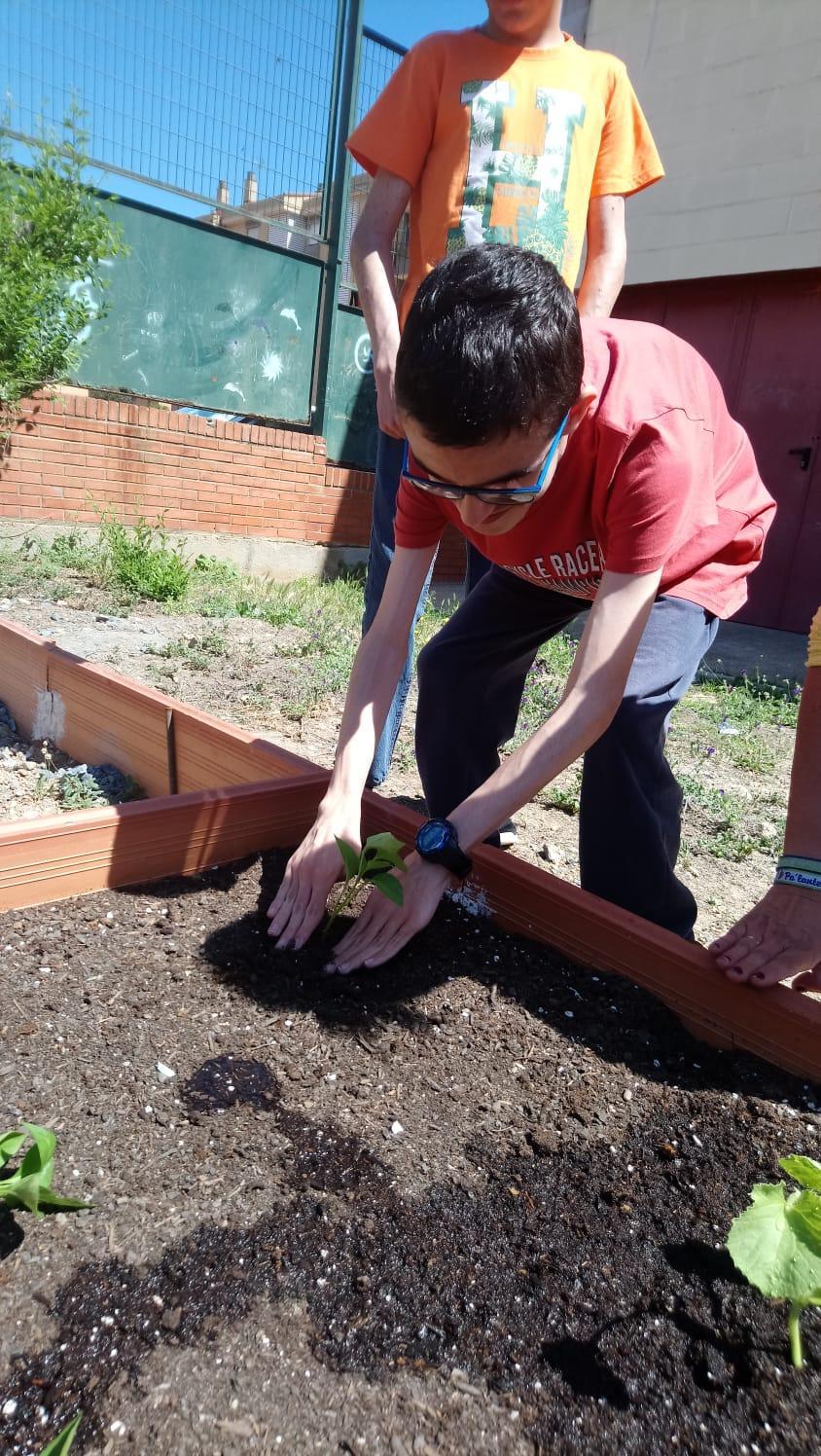 Creación del huerto escolar